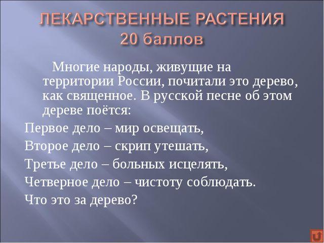 Многие народы, живущие на территории России, почитали это дерево, как свящ...