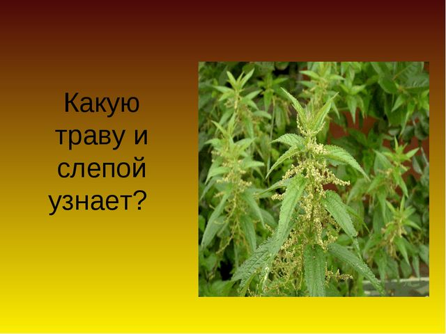 Какую траву и слепой узнает?
