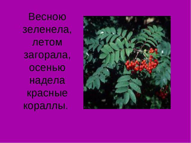 Весною зеленела, летом загорала, осенью надела красные кораллы.