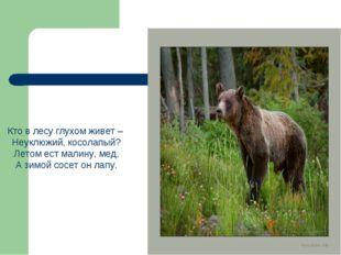 Кто в лесу глухом живет – Неуклюжий, косолапый? Летом ест малину, мед, А зимо