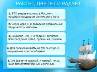 РАСТЕТ, ЦВЕТЕТ И РАДУЕТ 1. ЭТО впервые попало в Россию с посольскими дарами м