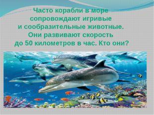 Часто корабли в море сопровождают игривые и сообразительные животные. Они раз
