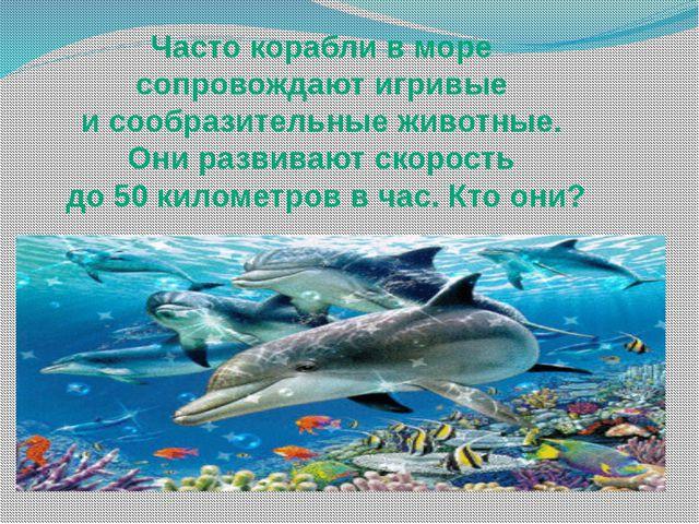 Часто корабли в море сопровождают игривые и сообразительные животные. Они раз...