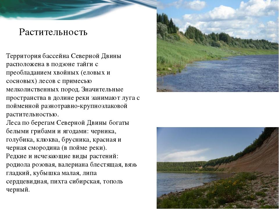 Растительность Территория бассейна Северной Двины расположена в подзоне тайги...