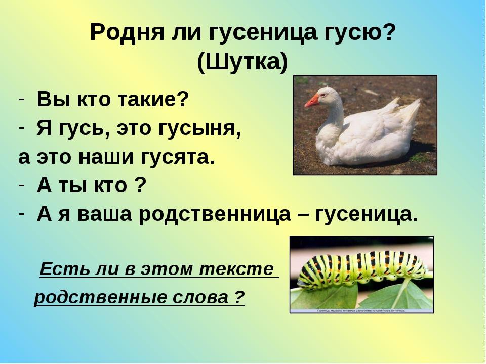 Родня ли гусеница гусю? (Шутка) Вы кто такие? Я гусь, это гусыня, а это наши...