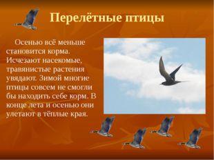 Перелётные птицы Осенью всё меньше становится корма. Исчезают насекомые, трав