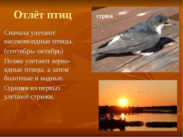 Отлёт птиц Сначала улетают насекомоядные птицы. (сентябрь- октябрь) Позже уле...