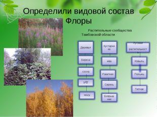 Определили видовой состав Флоры Растительные сообщества Тамбовской области