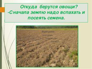 Откуда берутся овощи? -Сначала землю надо вспахать и посеять семена.