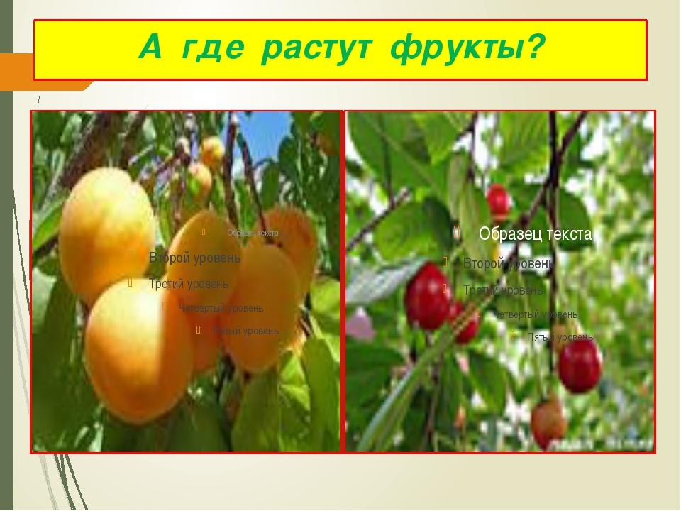 А где растут фрукты?