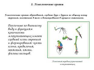 Палеонтологические доказательства 1. Сведения о филогенетических (эволюционны