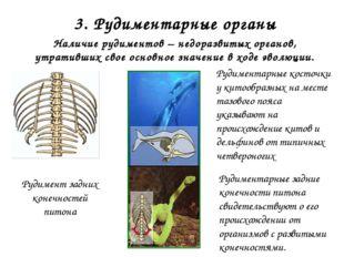 2. Сведения об ископаемых переходных формах организмов Признаки рептилий: дли