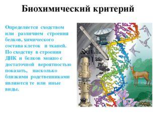 Структура вида ВИД ПОДВИД ПОПУЛЯЦИЯ