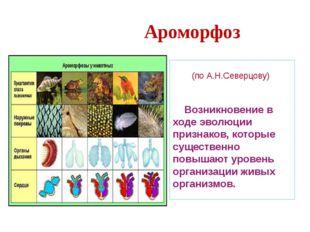 Саккулина – корнеголовый рак (паразит краба). Имеет вид мешка, набитого полов