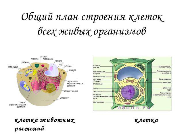 2. Принцип рекапитуляции – биогенетический закон Ребенок, не умеющий разговар...