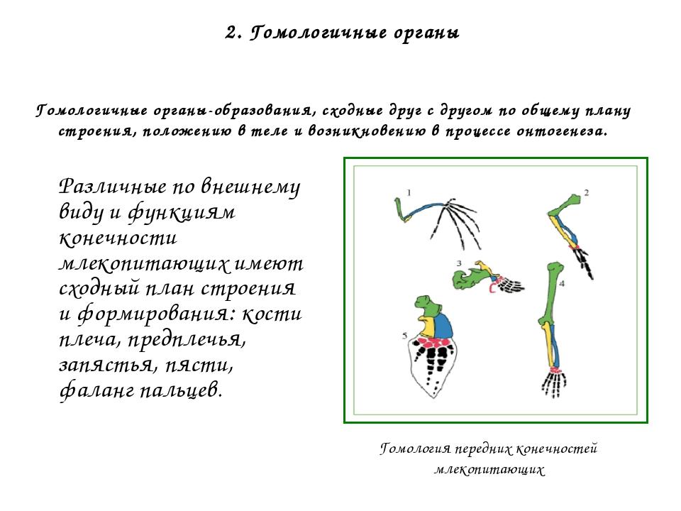 Палеонтологические доказательства 1. Сведения о филогенетических (эволюционны...
