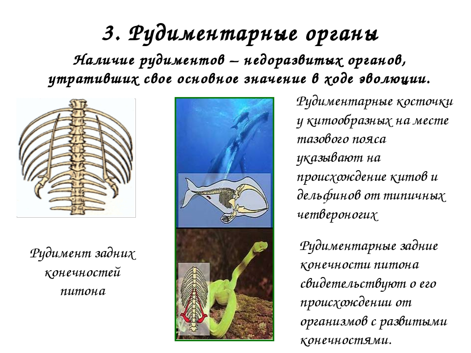 2. Сведения об ископаемых переходных формах организмов Признаки рептилий: дли...