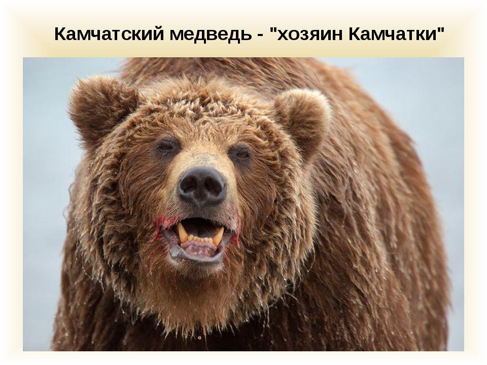 """Камчатский медведь - """"хозяин Камчатки"""""""