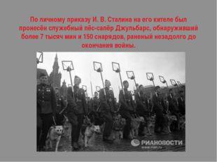 По личному приказу И. В. Сталина на его кителе был пронесёнслужебный пёс-сап