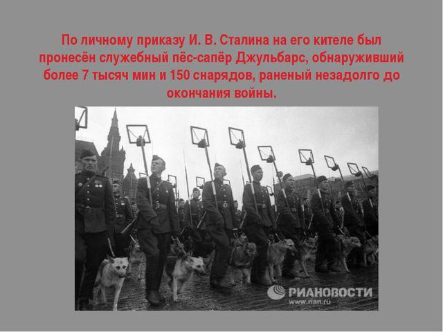 По личному приказу И. В. Сталина на его кителе был пронесёнслужебный пёс-сап...