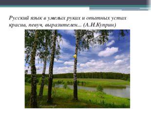 Русский язык в умелых руках и опытных устах красив, певуч, выразителен... (А.