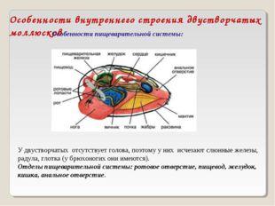 Особенности внутреннего строения двустворчатых моллюсков Особенности пищевари