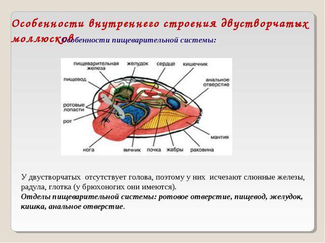 Особенности внутреннего строения двустворчатых моллюсков Особенности пищевари...