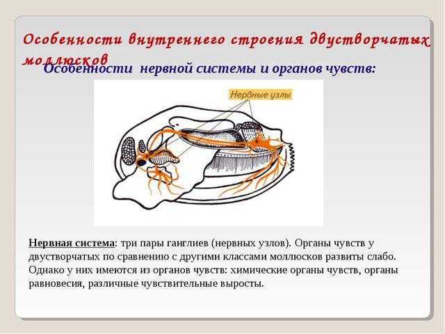 Особенности внутреннего строения двустворчатых моллюсков Особенности нервной...