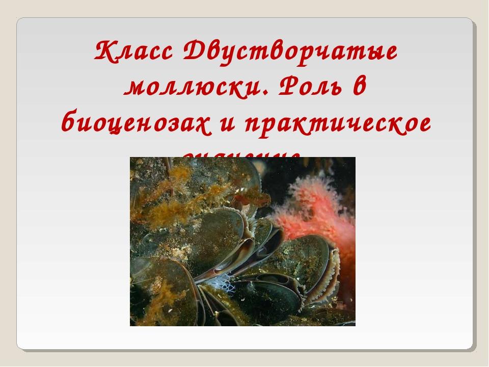 Класс Двустворчатые моллюски. Роль в биоценозах и практическое значение.
