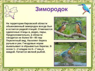 Зимородок На территории Кировской области обыкновенный зимородок всегда был