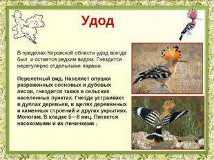 Удод В пределах Кировской области удод всегда был и остается редким видом. Гн