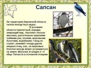 Сапсан На территории Кировской области сапсан всегда был редок. В условиях об