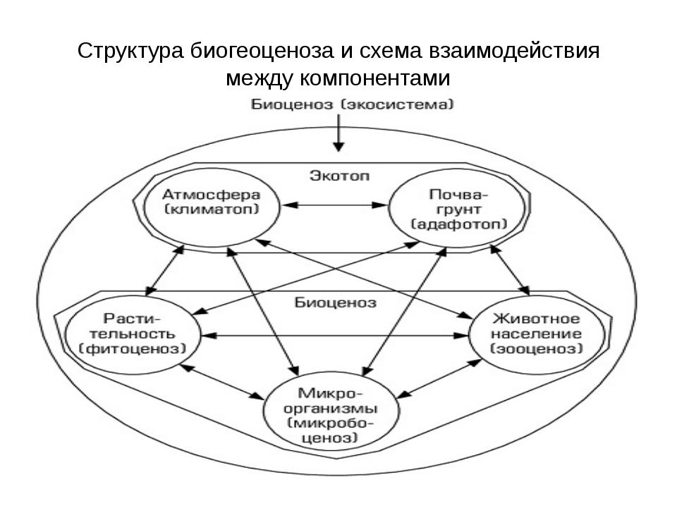 Структура биогеоценоза и схема взаимодействия между компонентами