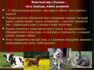 Животный мир у Есенина – часть природы, живой, разумной. У «братьев наших ме
