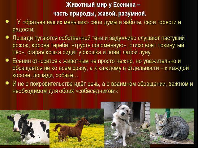 Животный мир у Есенина – часть природы, живой, разумной. У «братьев наших ме...