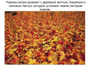 Порывы ветра срывают с деревьев желтые, багряные и лиловые листья, которые ус