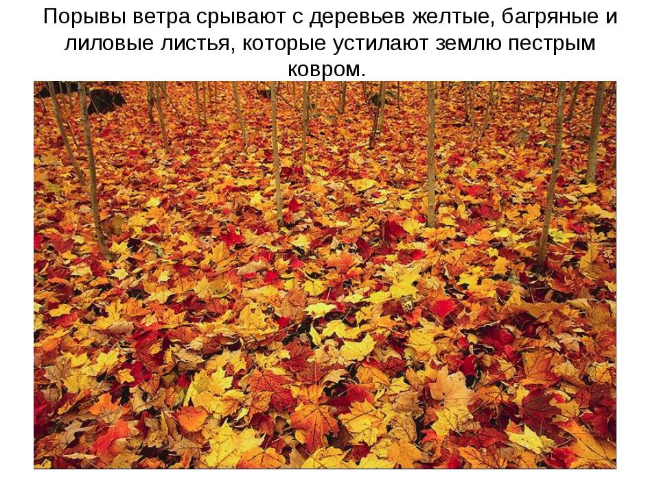 Порывы ветра срывают с деревьев желтые, багряные и лиловые листья, которые ус...