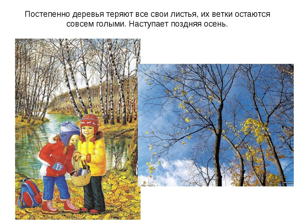 Постепенно деревья теряют все свои листья, их ветки остаются совсем голыми. Н...