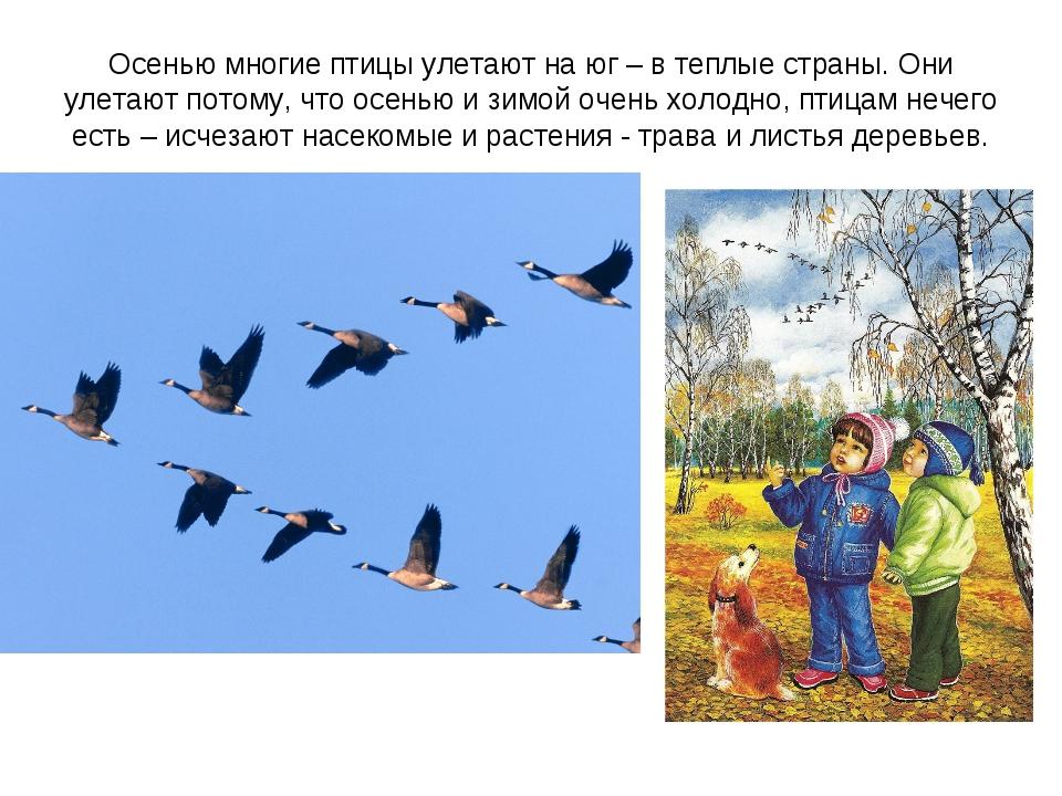 картинки по теме признаки осени