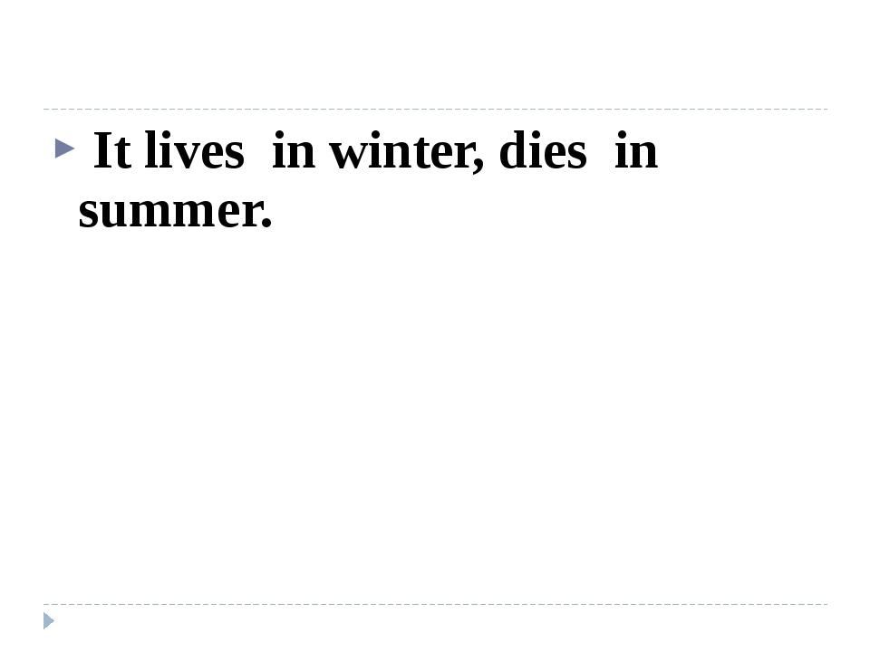 It lives in winter, dies in summer.