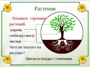 Растения Назовите строение растений. корень стебель(ствол) листья Чего не хва