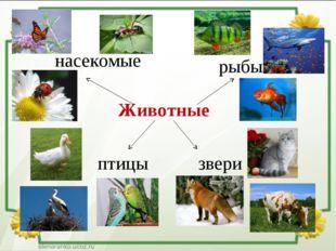 Животные насекомые рыбы птицы звери