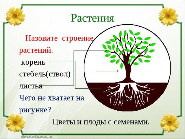 Растения Назовите строение растений. корень стебель(ствол) листья Чего не хва...