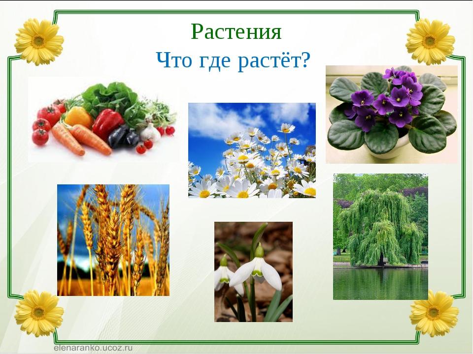 Растения Что где растёт?