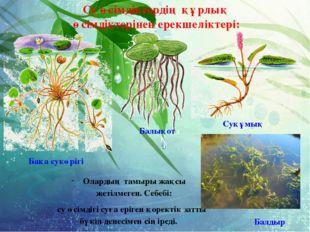 Су өсімдіктердің құрлық өсімдіктерінен ерекшеліктері: Балдыр Балықот Бақа су