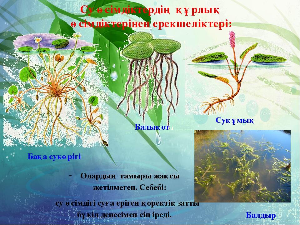 Су өсімдіктердің құрлық өсімдіктерінен ерекшеліктері: Балдыр Балықот Бақа су...