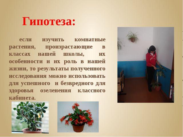 Гипотеза: если изучить комнатные растения, произрастающие в классах нашей шко...