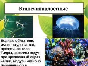 Кишечнополостные Водные обитатели, имеют студенистое, прозрачное тело. Гидры,