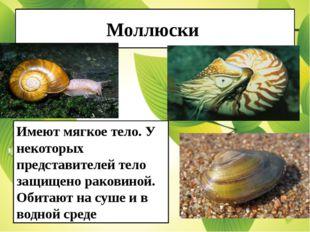 Моллюски Имеют мягкое тело. У некоторых представителей тело защищено раковино