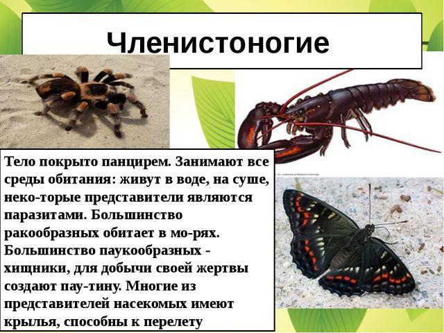 Членистоногие Тело покрыто панцирем. Занимают все среды обитания: живут в вод...